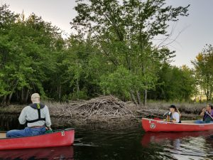 Pushaw Stream beaver lodge