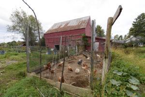 Annabessacook Farm chickens